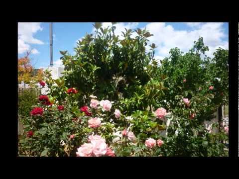 Alphaville - Sounds Like A Melody = Suena Como Una Melidia