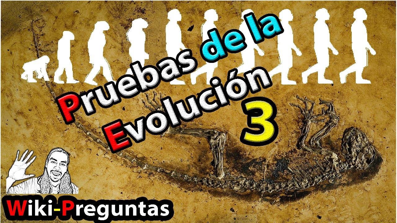 Pruebas reales de #Evolución | WikiPreguntas 3
