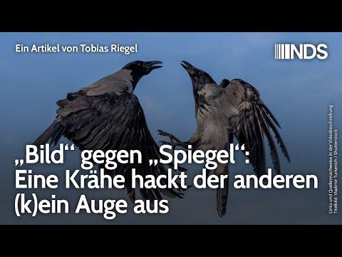 """""""Bild"""" gegen """"Spiegel"""": Eine Krähe hackt der anderen (k)ein Auge aus"""