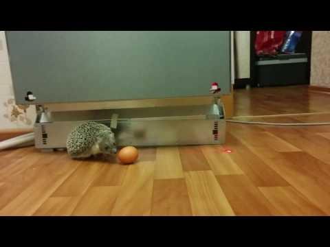 ПРИКОЛЬНАЯ ПОДБОРКА - Смешные кошки смотреть онлайн видео