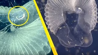5 Unexplained Mass Sightings of Mysterious Creatures!