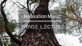 꽃과 함께 듣는 음악 [N°007] - 편안하게 듣는 음악 카페음악 Study Music 피아노연주 연속듣기