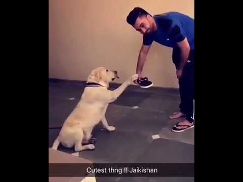 Sharry maan 🆚doggi fun time (cute dog)...