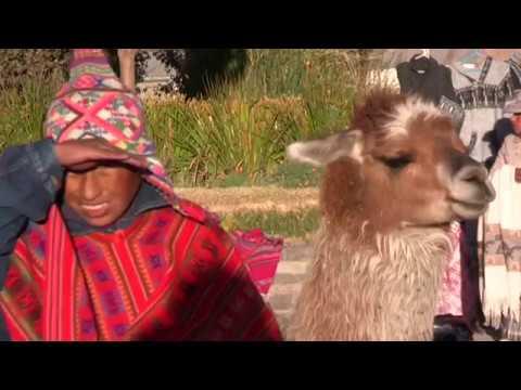 Camelidi del Sudamerica