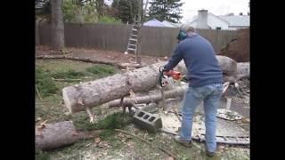 Бензопила и идиот. Неудачный спил дерева. Приколы