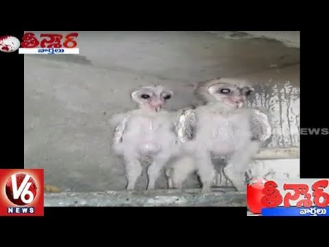Mysterious Birds Found In Vizag | Teenmaar News | V6 News