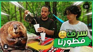 الحيوانات سرقت الفطور - مخيم الغابة