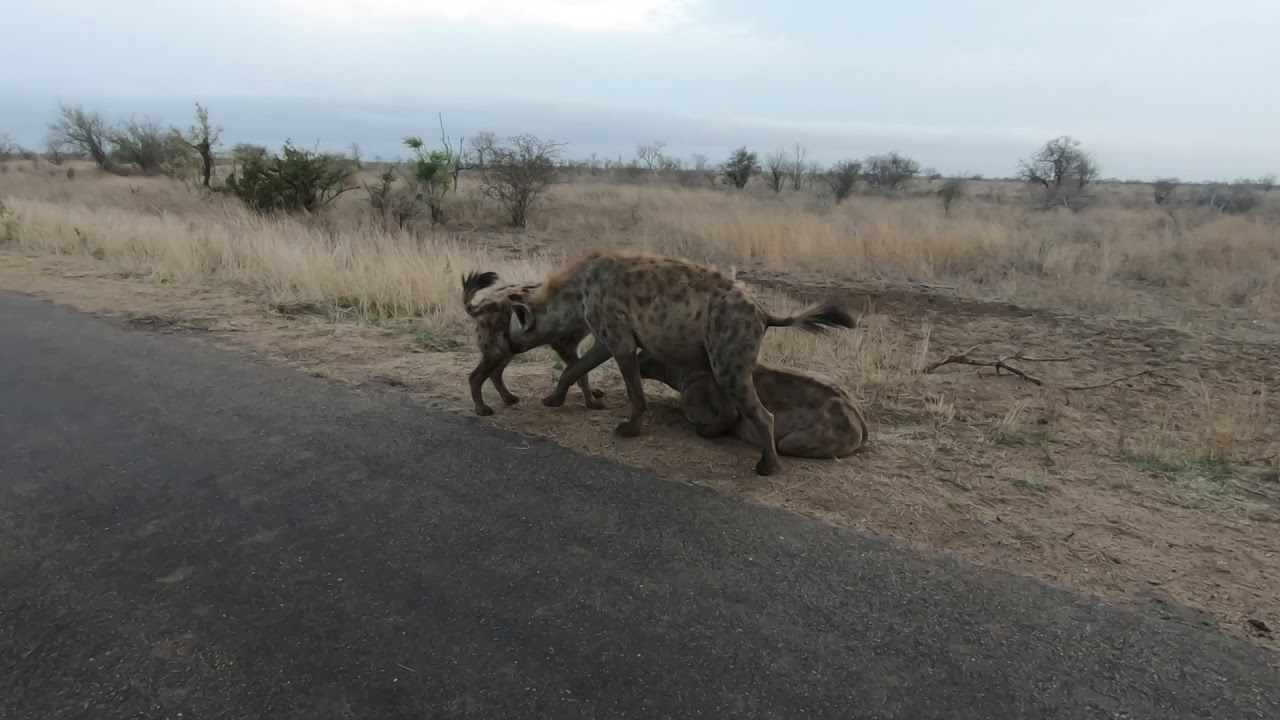 Famous animals in the Kruger National Park with Safaria