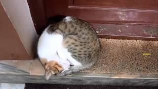 Внезапно и мило: сны кошек и собак