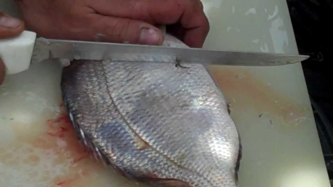 How to fillet a god dam porgy youtube for Porgy fish recipe
