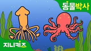 문어와 오징어는 어떻게 달라요? | 문어 vs. 오징어 | 무척추동물 | 동물박사★지니키즈