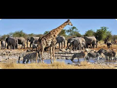 AFRICA EN FOTOS