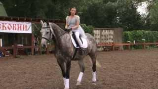 «Вятка Московии - 2013»- Региональная выставка лошадей в ЧКСК  «Лаир» 7