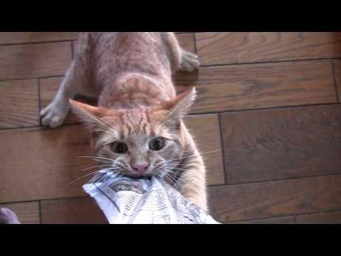 Cat Turns Treat Monster