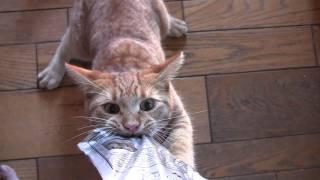 Cat Turns Treat Monster thumbnail