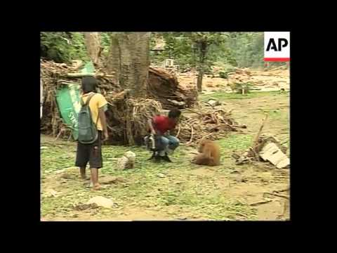 VOICER Recent floods destroy famous orangutan reserve