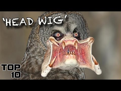 Top 10 Scary Mutant Animals Created By Science