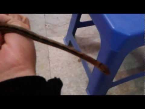 P0p Pet shop : test rắn hổ ngựa cho khách 30.11.2012