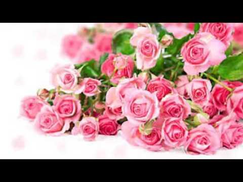 Rose Flower Wallpaper Youtube