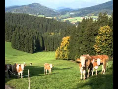 I bin´s aus Oberösterreich.mpg