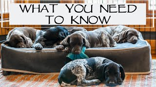 Top Things To Know When Picking Up Your New Puppy