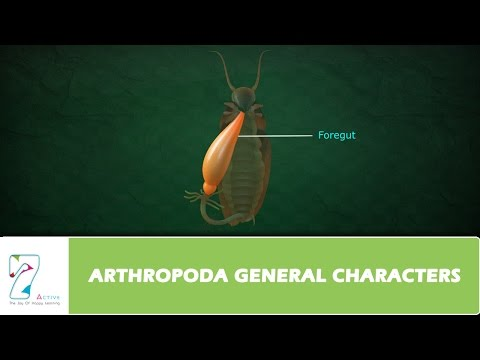 ARTHROPODA GENERAL CHARACTERS