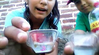 Cuburi de gheata din cocacola