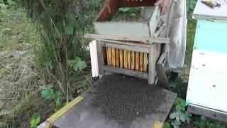 пчёлы без улья после медосбора(, 2014-08-05T20:04:50.000Z)