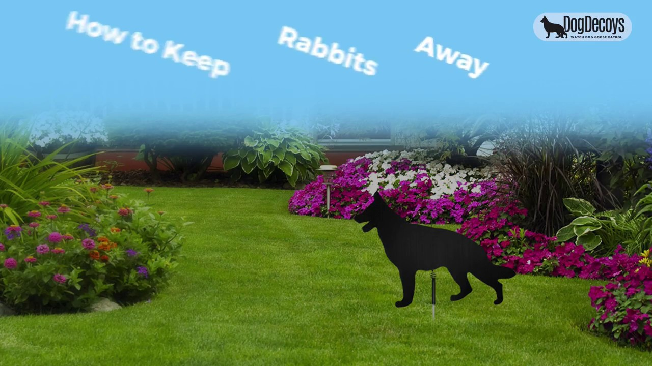 how to keep rabbits away youtube