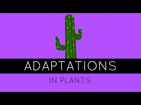 Adaptations In Plants - How Do Plants Adapt To Different Climates? - GCSE Biology