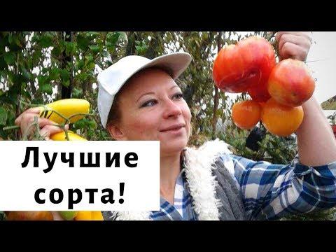 Самые вкусные сорта помидор 2019. Обзор томатов
