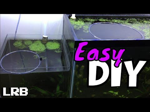 DIY Feeder Ring What Why And How For Aquarium Plants When Your Floating Plants Takeover
