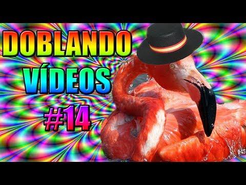 DOBLANDO VÍDEOS #14 - FLAMINGO FLAMENCO - xurxocarreno
