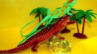 Крокодил. Животные. Цирк. Смешные ящерицы. Для детей