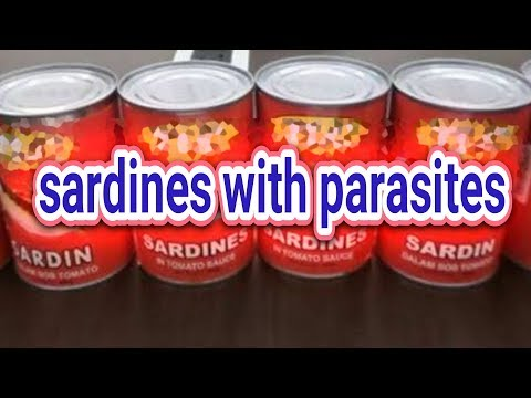 China Exports Sardines Infected With Parasitic Worms
