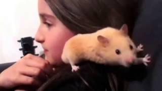 Les aventures de Miminou , evolution des bébés hamsters