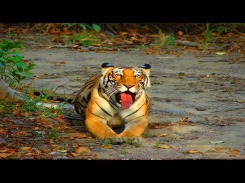 Wild life of South India - India Magical Trip