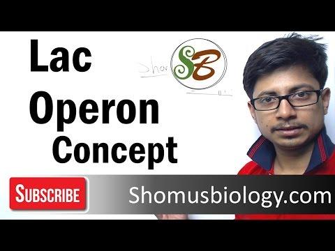 Lac Operon - gene regulation in prokaryotes