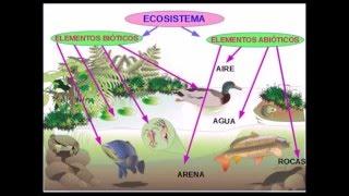 Ecosistemas y sus elementos