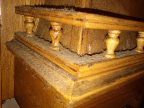 CLEAN GREASY Kitchen cabinets using NATURAL products!