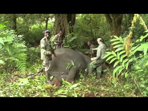 Elephant Conservation Research in Cameroon