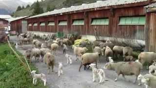 bergerie & étable à Molines en Queyras