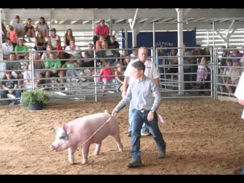 josephine county swine auction