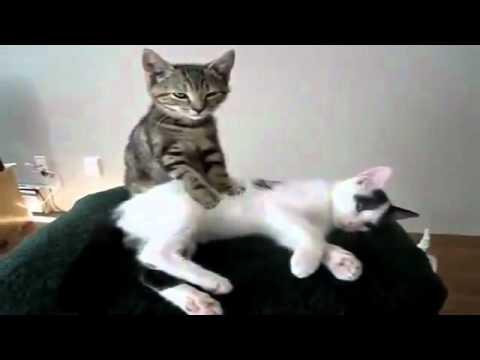 Cười vỡ bụng với clip những trò lố của thú cưng.flv