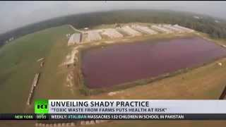 Drone footage exposes US factory farm reality incl football-pitch sized 'cesspool'