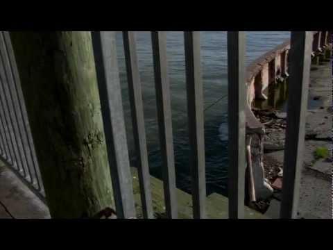 SS PALO ALTO Documentary