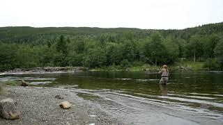 Salmon 13,5 kg Orkla Norway Aunan Igd-pool flyfishing