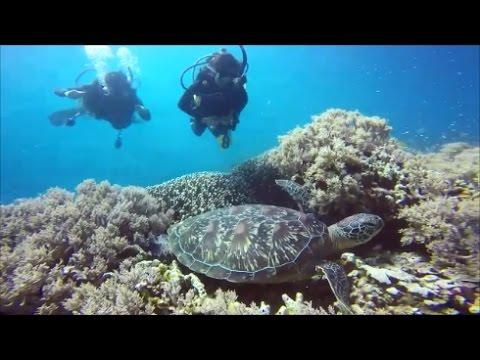 Dumaguete Philippines 2017 - diving