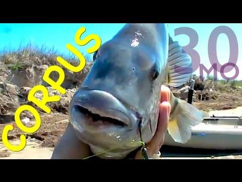 Sheepshead & Runt Reds Fishing CORPUS CHRISTI Texas