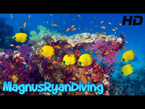 SCUBA diving Egypt Red Sea - UHD 4k